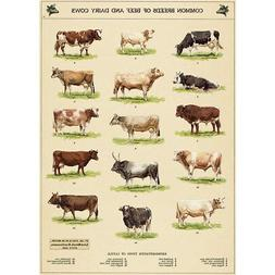 Cow Chart Vintage Style Cattle Breeds Poster Decorative Pape
