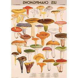 French Mushroom Chart Vintage Style Poster Decorative Paper